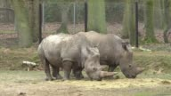Intruders at a French zoo shot dead a fouryearold southern white rhino named Vince and hacked off its horns in a grisly overnight poaching incident...