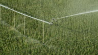 Irrigation Pivot Sprinkler from Above Watering Cornfield