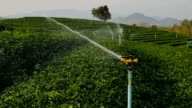 Irrigation Sprinklers at tea field (Slow motion)