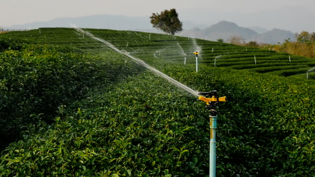 Irrigation Sprinklers at tea field (Slow motion)