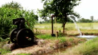 Irrigation Thorough Tube Well in the Field of Paddy Crop