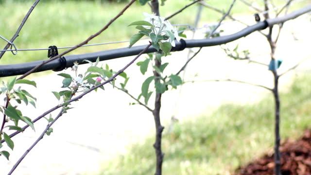 Irrigation (HD)