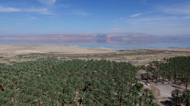 Isarel, aerial view of the Dead Sea with palm trees
