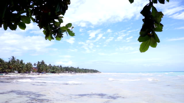 Island afar with tree branch on foreground