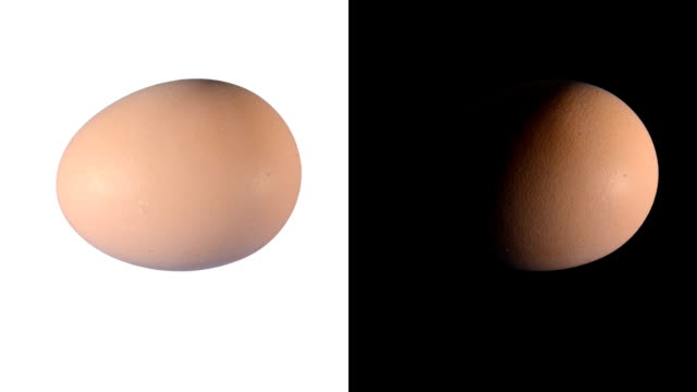 ALPHA: Isolated egg