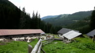 Italy, Cavalese, shelter for herd of goats
