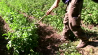 Italy, Fiemme valley, farmer working on field