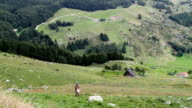 Italy, the forest of Cansiglio, shepherd who plants a fence