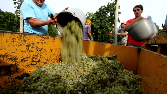 Italy, wine production