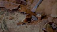 SLO MO Jackhammer's chisel removing tiles