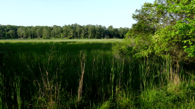 Jamestown Island tidal marsh James River trees Colonial NHP Virginia