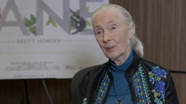 INTERVIEW Jane Goodall on the polio breakout at Dr Jane Goodall Interview at Kensington Hotel on November 15 2017 in London England