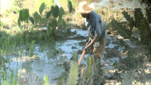 January 5 2011 MONTAGE Farmer digging soil in flooded field / Mirebalais Haiti