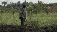 January 8 2011 WS Farmhand hoeing freshly turned soil on sugar cane farm / Leogane Haiti