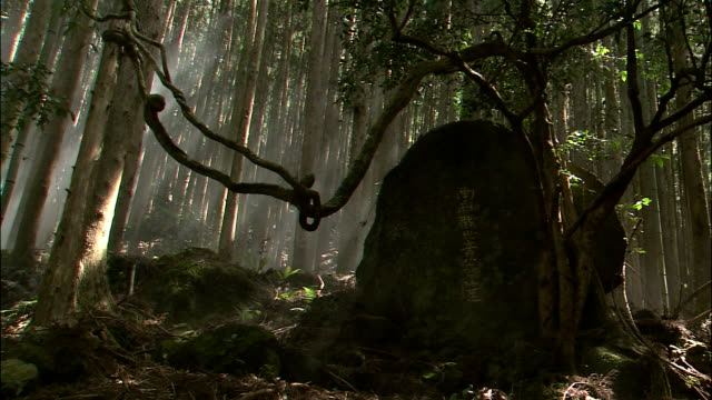 Japanese characters on wayside stone with mist moving through trees in background, Kii Mountains, Wakayama