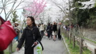 Japanese visitors walking up and down a concrete path at a city garden in Kyoto