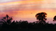 Jet plane landing on sunset background.