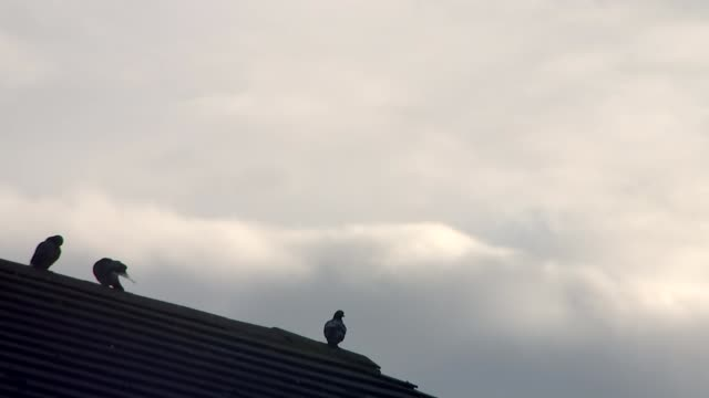 accused Thomas Mair 'shouted Britain First' West Yorkshire Birstall EXT Pigeons of rooftop of building with dark clouds overhead Bus along high...