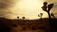 """Joshua Tree """"Hidden Valley"""