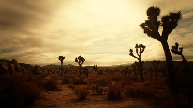 "Joshua Tree ""Hidden Valley"