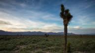 Joshua Tree in Mojave Desert - Time Lapse