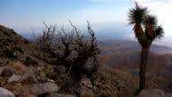 Joshua Tree National Park time lapse