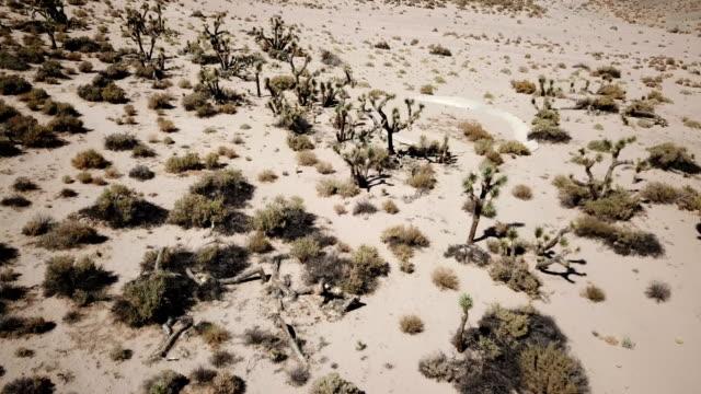 Joshua bomen in California woestijn