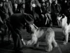A judge examines an Afghan Houng during a dog show