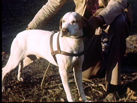 CU, Judge examining hunting dog in dog show, 1950's, Oklahoma, USA
