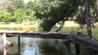 Jumping off the dock HD