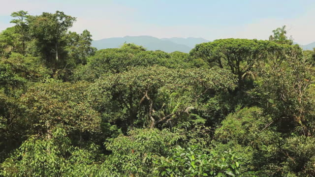 Jungle Canopy HD