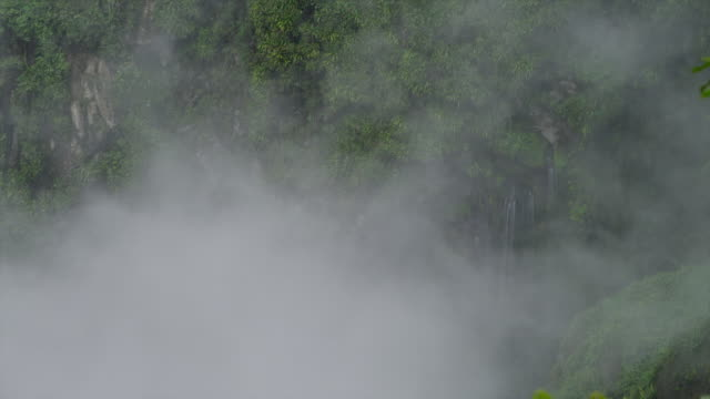 WS Jungle mist rising above the rainforest with small waterfall in the background / Tena, Napo, Ecuador
