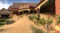 Kate Jones Reporting Tumbleweeds are piling up roof high outside homes in Wangaratta MAN WALKS THROUGH HEAD HEIGHT TUMBLEWEEDS / MAN BLOWS...
