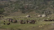 Kazakh yurts/gers and livestock, Kalamaili Nature Reserve, Xinjiang, China