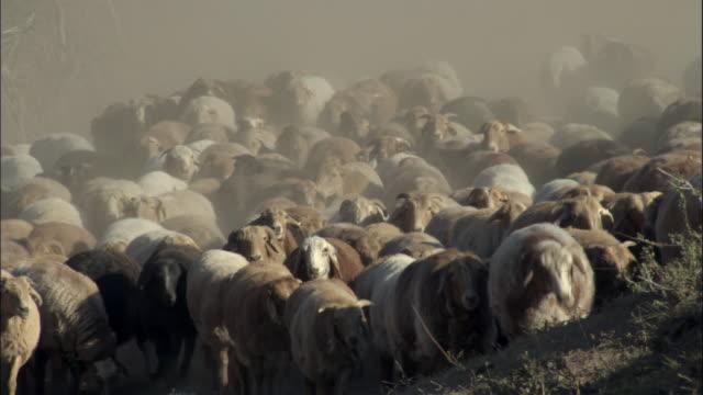 Kazakhs herd sheep through dusty valley, Kalamaili Nature Reserve, Xinjiang, China