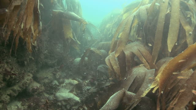 Kelp gulley at St Bride's Bay in Pembrokeshire, Wales