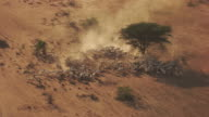 Kenya Dadaab : Herd of cattle near the refugee camp
