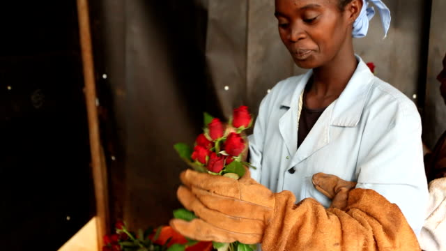 Kenya, Simbi Roses, Thika, production of fair trade roses