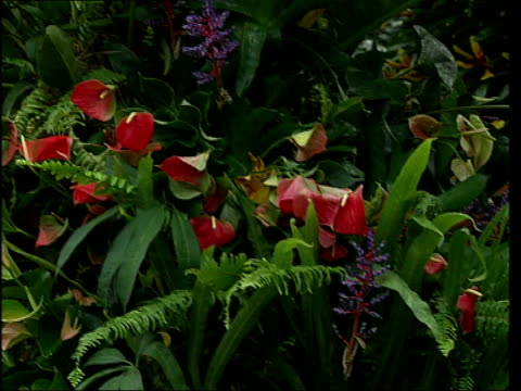 Tropical plants on display at exhibition ENGLAND London Kew Gardens Princess of Wales Conservatory INT General views of exotic flowers on display at...