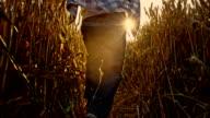 SLO MO Kid having fun running through wheat field