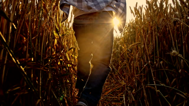 SLO MO Kid having fun running through wheat field