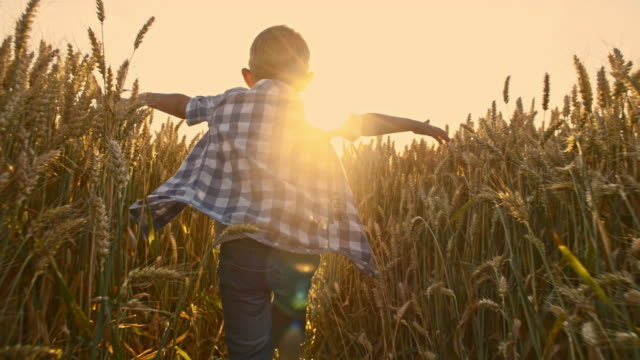 SLO MO Kid running in wheat field