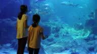 Kids looking at fish in a big aquarium