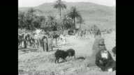 King Faisal bin Hussein stands as his troops with guns and ammo belts walk toward him / tribesmen civilians camels palm trees goats gather at the...
