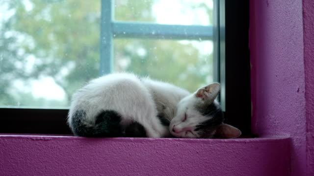 kitten cat sleeping