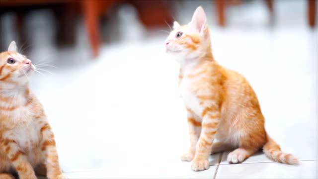 Kitten playing on a floor.