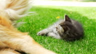HD SUPER SLOW-MO: Kitten Playing With Dog's Tail