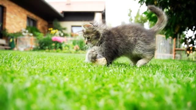 - SUPER ZEITLUPE, HD: Katzenjunges Laufen auf dem Rasen