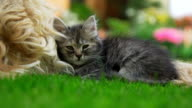 HD: Kitten Sleeping Next To A Dog