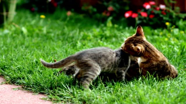 Kittens in garden